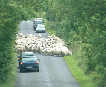 Another Weird Little Driving Hazard In >> Tips