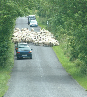 Learning to drive - hazard routing Sheep